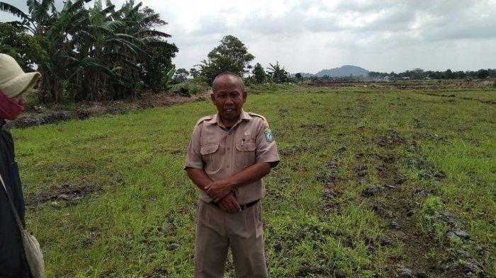 125 Hektar Sawah di Danau Nujau Desa Gantung Kekeringan
