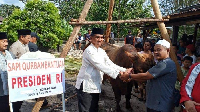 Daging Sapi Bantuan Presiden RI Joko Widodo akan Dibagikan ke Tujuh Desa Kecamatan Gantung