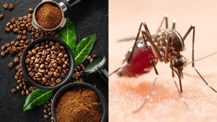 Cuma Taruh Ampas Kopi di Genangan Air, Nyamuk Tak akan Berani Masuk Rumah!