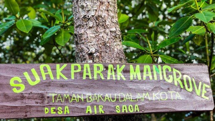 Wisata Suak Parak Mangrove Park. Objek wisata baru yang berada di Desa Air Saga atau berjarak sekitar 4 kilometer saja dari Pusat Kota Tanjungpandan, Belitung.