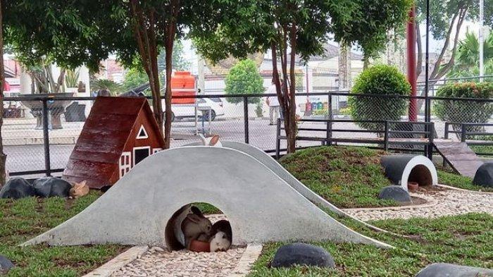 Rumah Dinas Jadi Mini Zoo, Ada Taman Kelinci Sampai Rusa Istana, Masyarakat Boleh Masuk Gratis