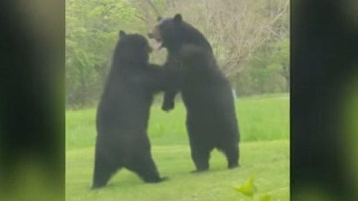 Amit-Amit, Jangan Sampai Bertemu Beruang di Dalam Mimpi, Dikhawatirkan Pertanda Buruk Terjadi
