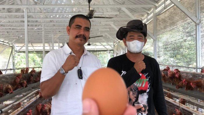 BUMDes Medang Perawas Kembangkan Ayam Petelur, Harga Murah hingga Penuhi Kebutuhan Hotel