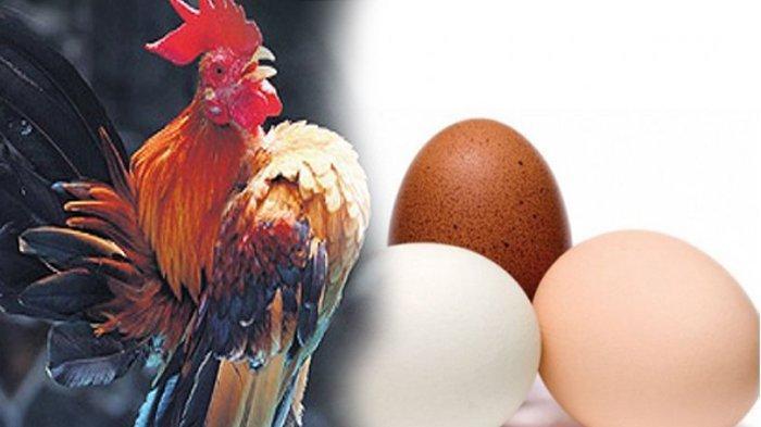 Temukan Harta Senilai Rp 4 Miliar di Dalam Ayam, Wanita ini Mendadak Kaya