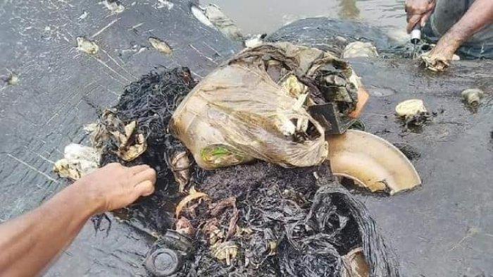 Paus dan Penyu Tewas Karena Makan Plastik, Tapi Tetap Klaim Plastik Paling Ramah Lingkungan