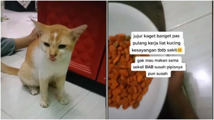 Viral Kucing Ditendang Tetangga hingga Perutnya Bengkak, Ini Motif Pelaku Tega Menganiaya