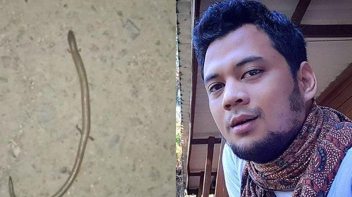 Panji Petualang Buka Suara soal Ular Berkaki Empat di Sulawesi Selatan Disebut Tanda Kiamat