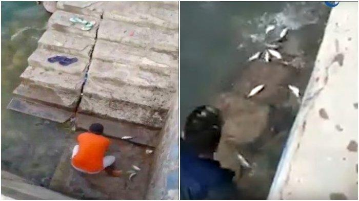 Viral Ikan Loncat dari Laut di Gorontalo Dikatikan Dengan Gempa, Ini Penjelasan Pakar dan Sejarahnya
