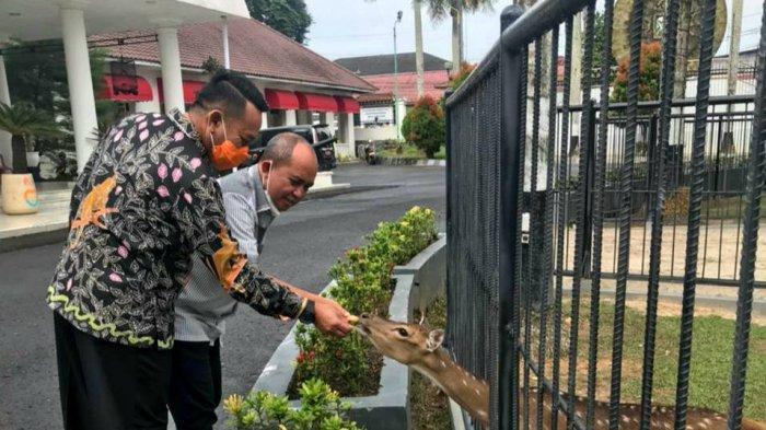 Wako Molen dan Aan Bupati Belitung Timur Terpilih Kompak Beri Makan Bonang, Si Rusa Rumdin