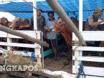 2021-sapi-tiba-di-kabupaten-belitung.jpg