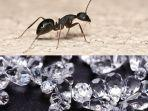 ada-ada-saja-seekor-semut-tertangkap-basah.jpg
