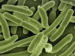 bakteri-dan-virus.jpg