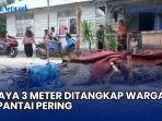buaya-3-meter-ditangkap-warga-di-pantai-pering-desa-mayang-dijerat-pakai-tali-video.jpg