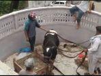 capture-tangkapan-layar-sapi-diturunkan-dari-bumbung-bangunan-menggunakan-crane-4.jpg