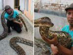 demi-memberi-makan-10-ularnya-pria-ini-habiskan-3-juta-rupiah-per-bulan_20180710_204623.jpg