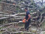 evakuasi-pohon-tumbang-di-manggar.jpg