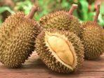 ilustrasi-durian.jpg