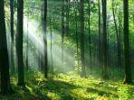 ilustrasi-hutan.jpg