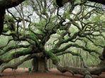 ilustrasi-objek-wisata-angel-oak-tree-di-amerika.jpg