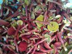 jamur-atau-kulat-pelawan-asal-pulau-belitong.jpg