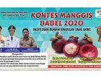 kegiatan-kontes-manggis-bangka-belitung-2020.jpg