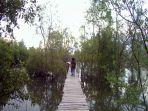 kondisi-mangrove_20170324_213501.jpg