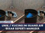kucing-bab.jpg