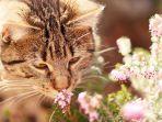 kucing-kucing.jpg