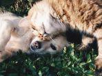 kucing2.jpg