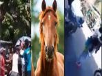 kuda-gigit-orang_20180222_193708.jpg
