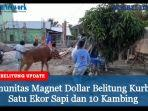 magnet-dollar-belitung-salurkan-hewan-kurban.jpg
