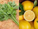 manfaat-air-rebusan-seledri-dan-jus-lemon-untuk-kesehatan.jpg