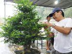 pameran-bonsai-di-belitung.jpg