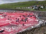 paus-yang-terdampar-dan-dibantai-di-pulau-faroe-denmark_20180817_191353.jpg