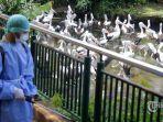 petugas-menyemprotkan-cairan-disinfektan-di-area-kebun-binatang-ragunan.jpg