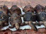 potret-kura-kura-yang-ditemukan-mati-di-laut-diduga.jpg