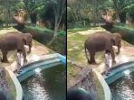seekor-gajah-dipukul-oleh-pawang-hingga-viral-di-media-sosial-senin-172019.jpg