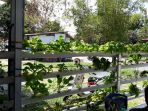 tanaman-sayur-hidroponik_20170323_193652.jpg
