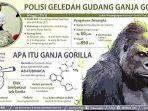tembakau-gorilla_20170117_155004.jpg