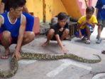 ular-sanca_20170223_100907.jpg