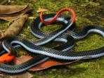 ular_20161107_194858.jpg
