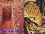 ular_20170818_233011.jpg