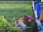 video-6-petani-di-sragen-meninggal-tersengat-listrik-di-sawah.jpg