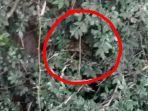 warga-melihat-penampakan-ular-sanca_20180720_092604.jpg