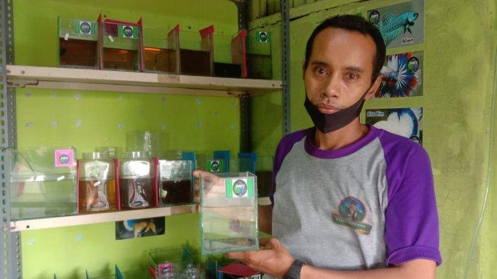 WAG Lelang Cupang Plakat Nusantara Salurkan Hasil Jual Cupang untuk Santri