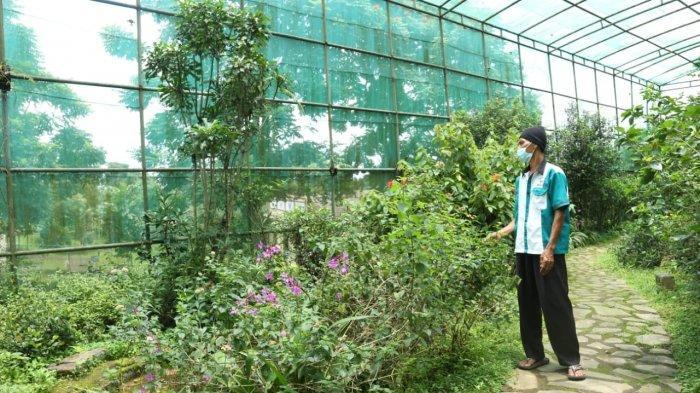 Berkunjung ke Agrowisata Taman Kupu-Kupu Sinar Wangi, Bikin Takjub Dijamin Tambah Wawasan