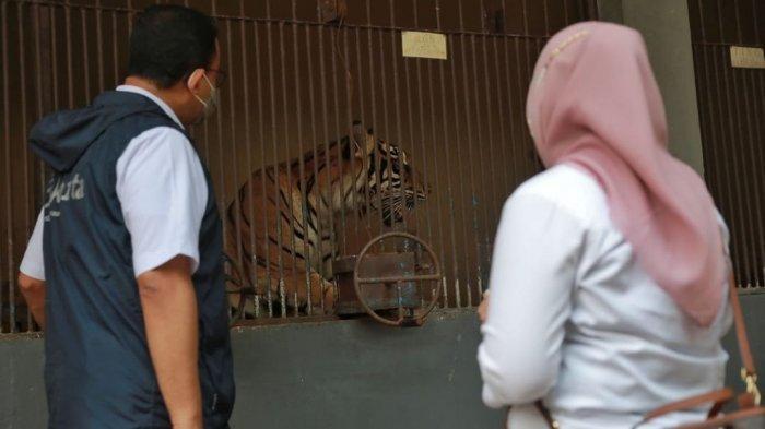 Datangi Kandang Harimau, Momen Anies Jenguk Hari dan Tino Tuai Perhatian : Tidak Harus Buru-buru WFO