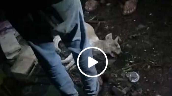 Viral Video 'Anjing Jelmaan' Dikubur Hidup-hidup, Polisi Pastikan Itu Hoaks