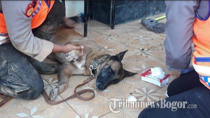 Dua Anjing Pelacak yang Diterjunkan di Lokasi Longsor Cisolok Sukabumi Terluka