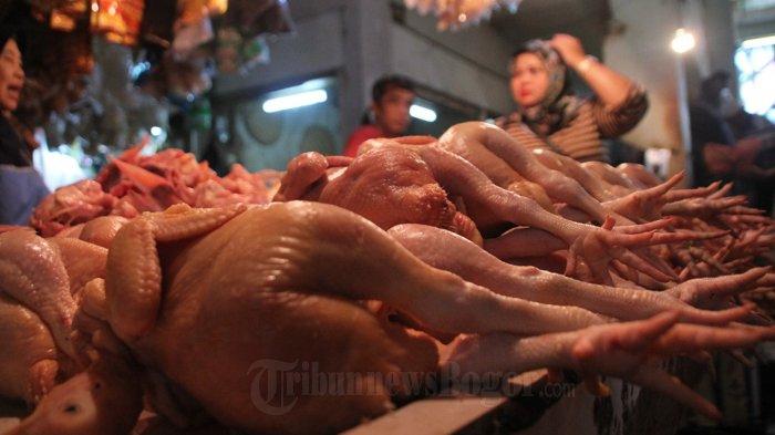 Guru Besar IPB Ungkap 45 Persen Daging Ayam Tercemar Bakteri Salmonella